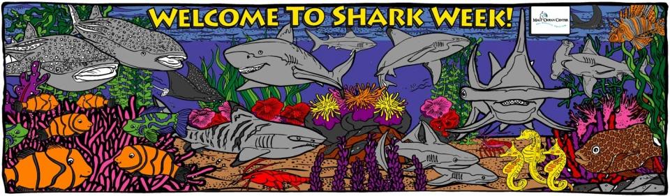 Sharks! - 1268